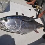 pesca-al-tonno